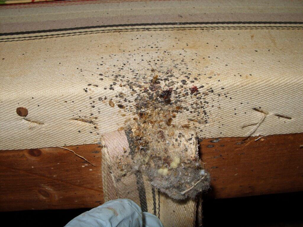do where live pest walker bugs tag hide bed bedbugs archives management