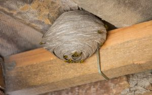 Termites not only love all the wood your attic has to offer but they also enjoy munching on all the furniture clothing and other items you have stored up ... & Why Pests Love Your Attic