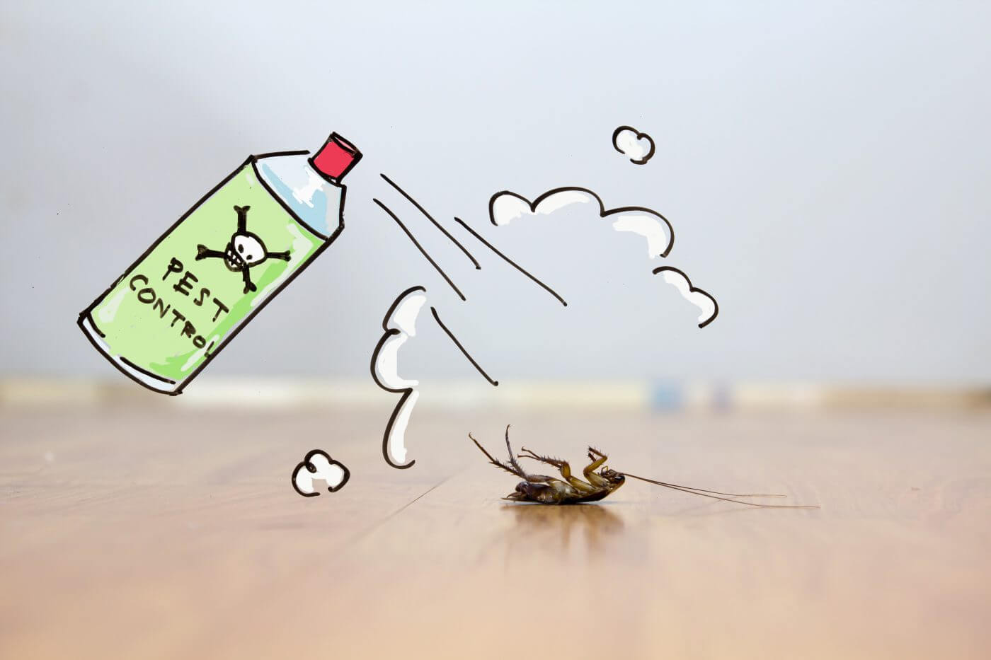 Common Pest Control Myths Debunked