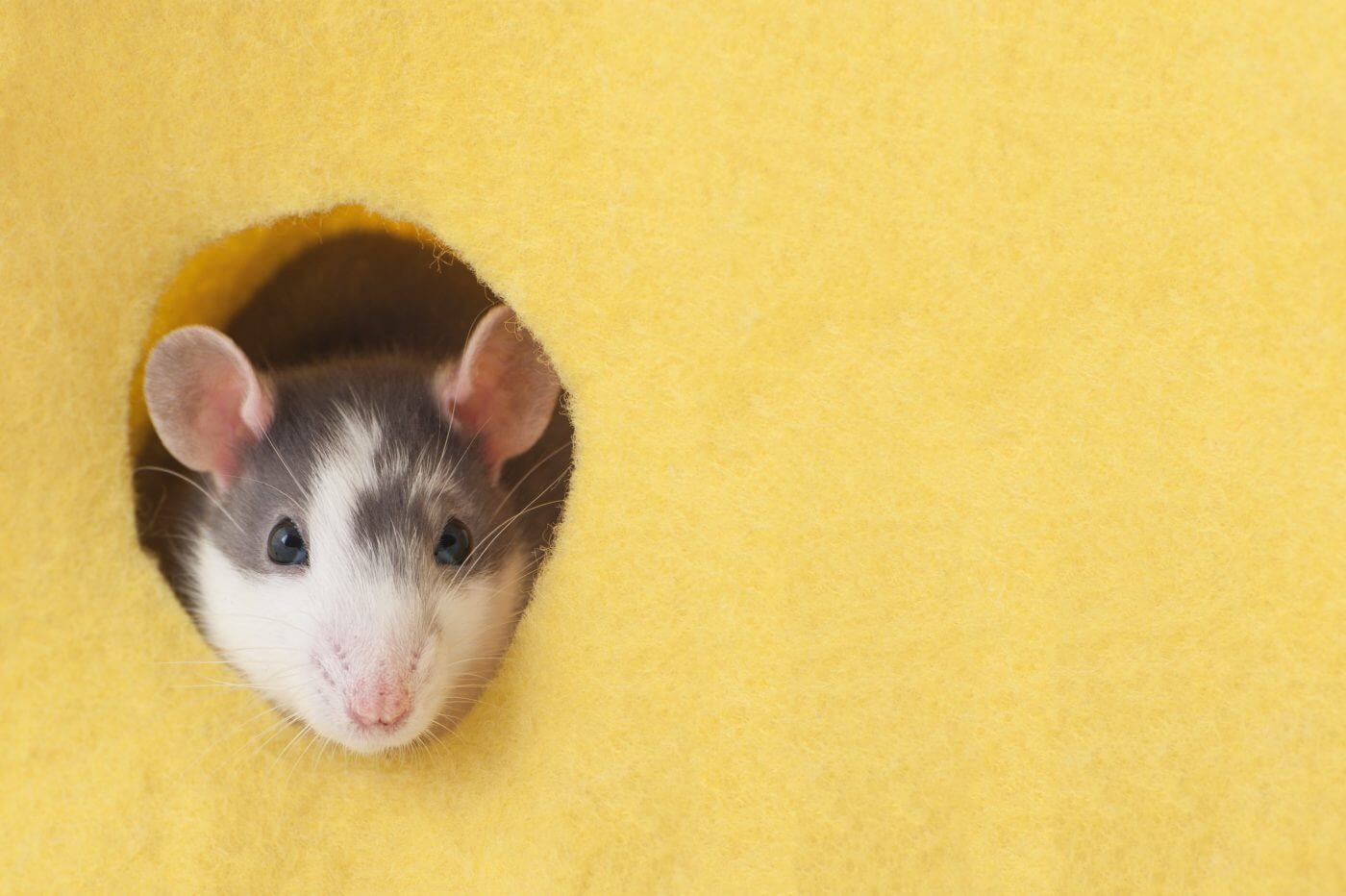 4 Ways to Keep the Mice From Stirring This Holiday Season