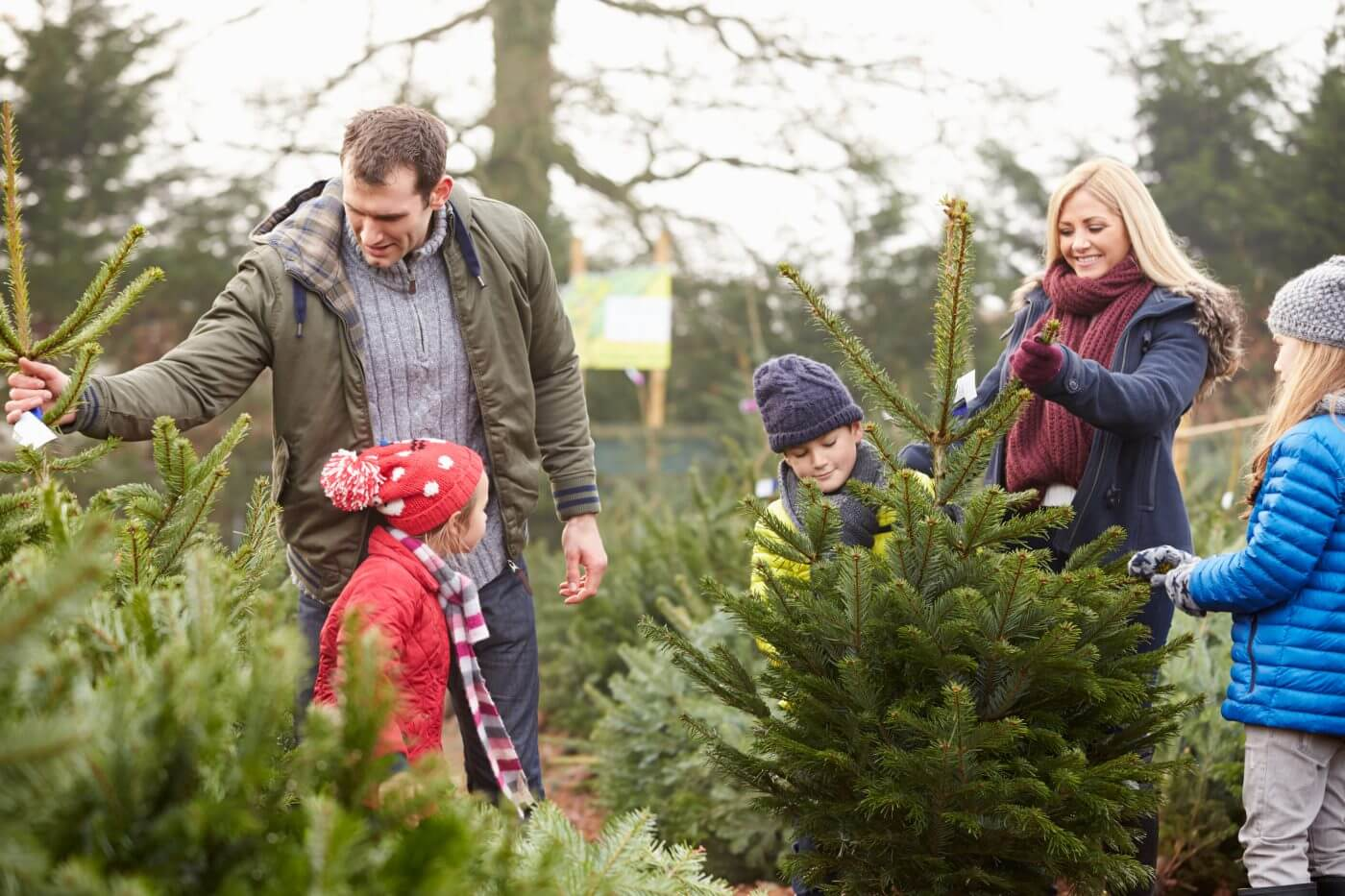 Common Christmas Tree Pests and How to Control Them
