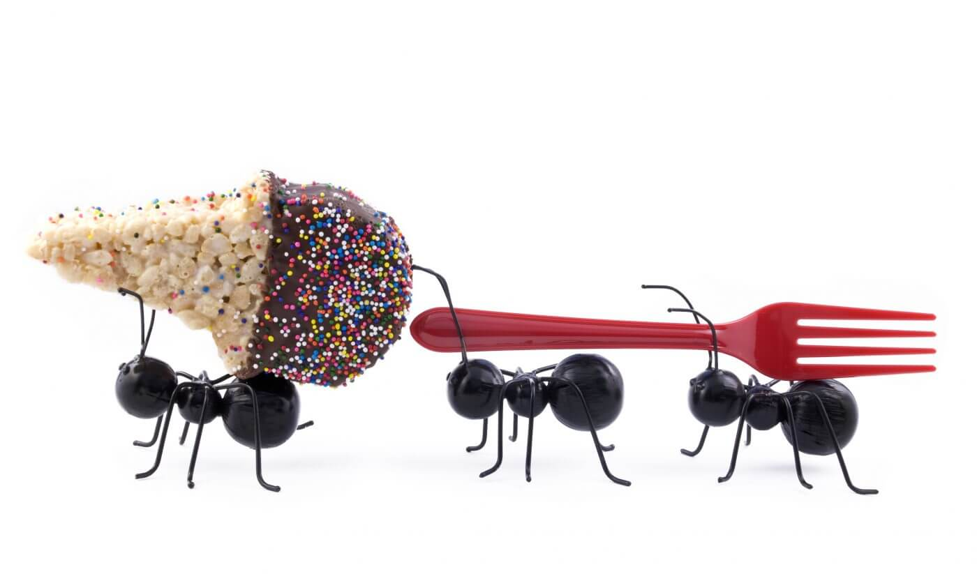 7 Secrets to Getting Rid of Ants