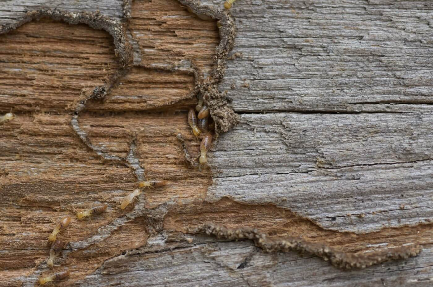 6 Signs You Might Have a Termite Problem