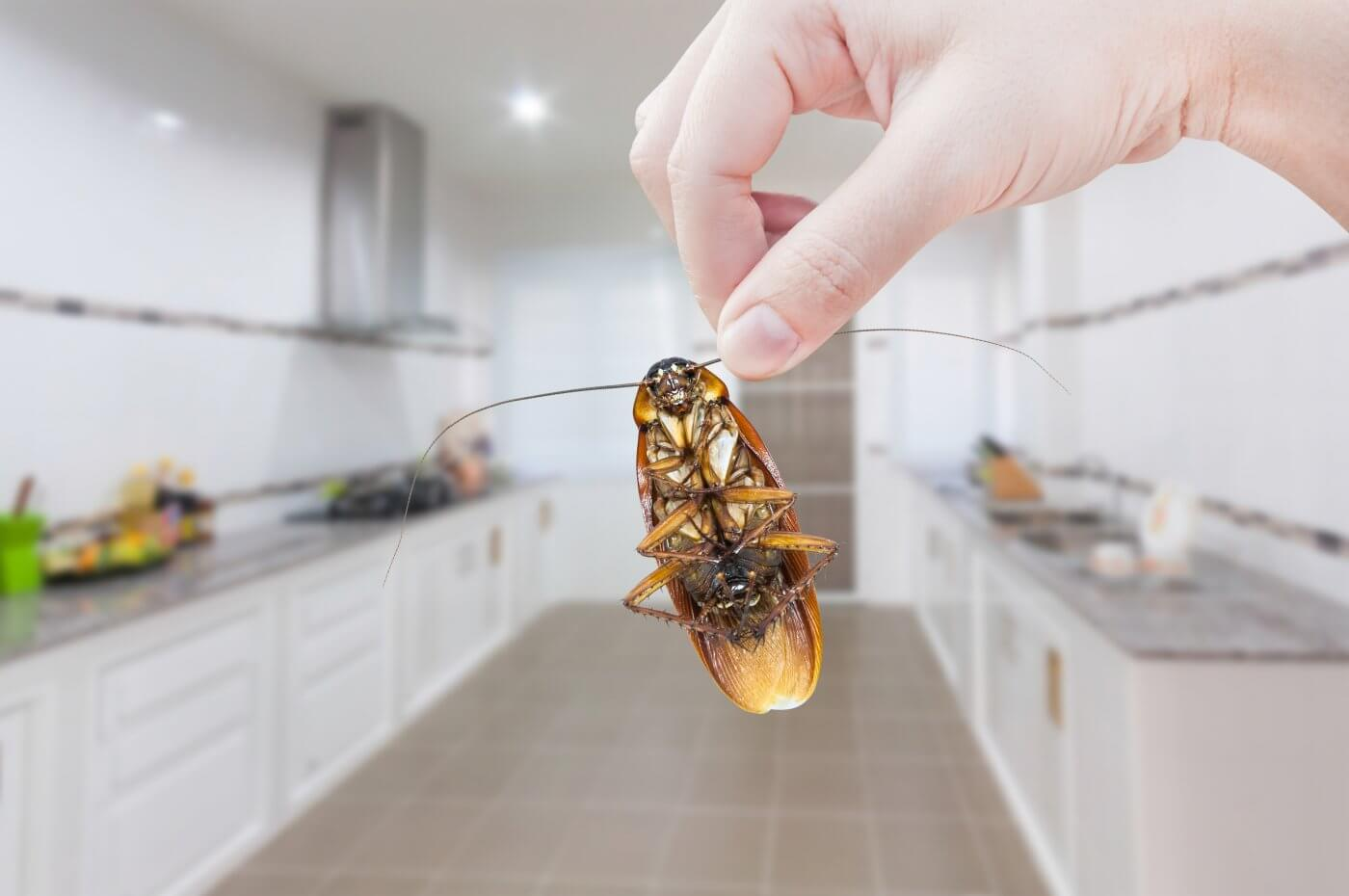 4 Rooms Where Pests Hide in the Winter