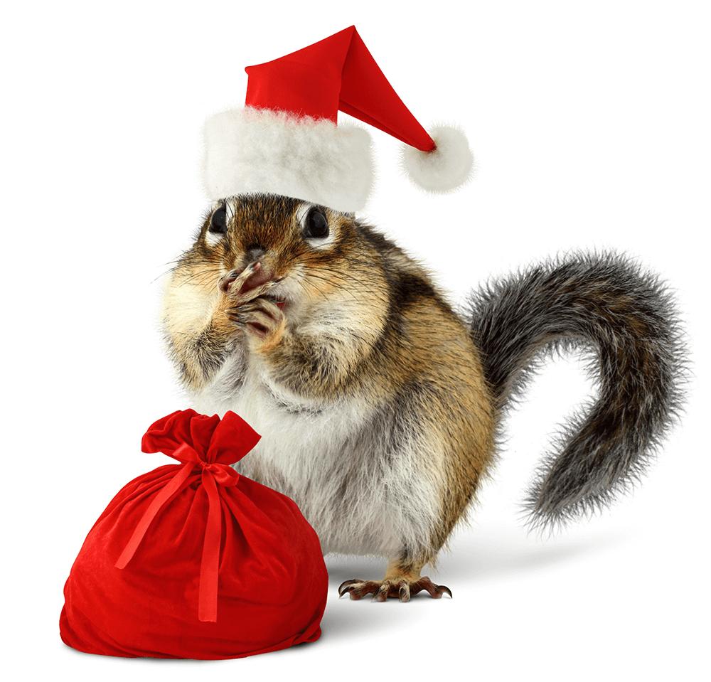 The 12 Pests of Christmas