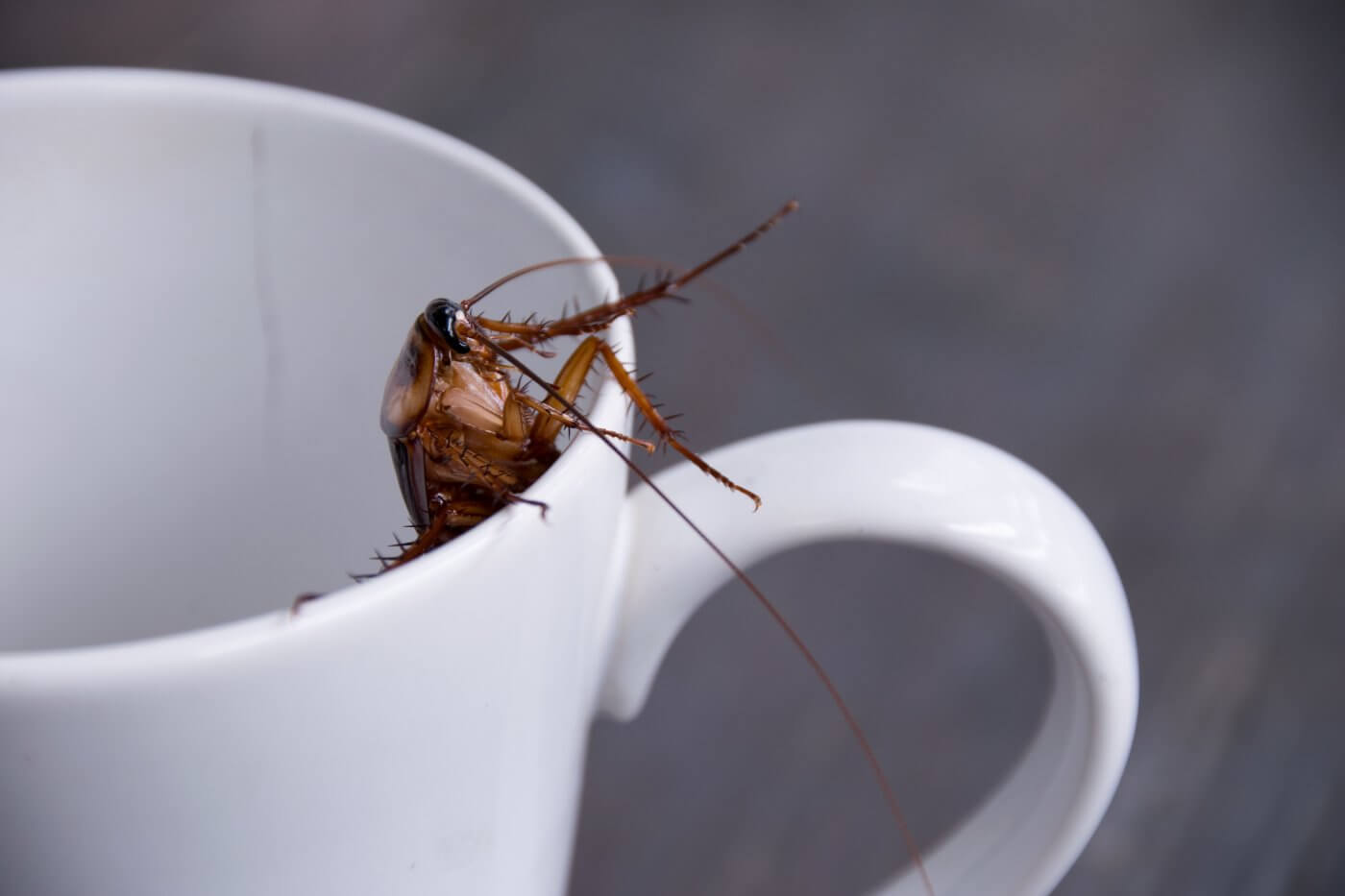 4 Tips for Getting Rid of Cockroach Allergens