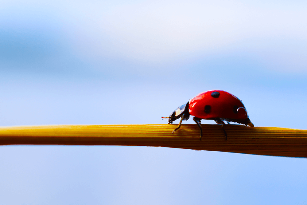 5 Bugs that can Bring You Luck