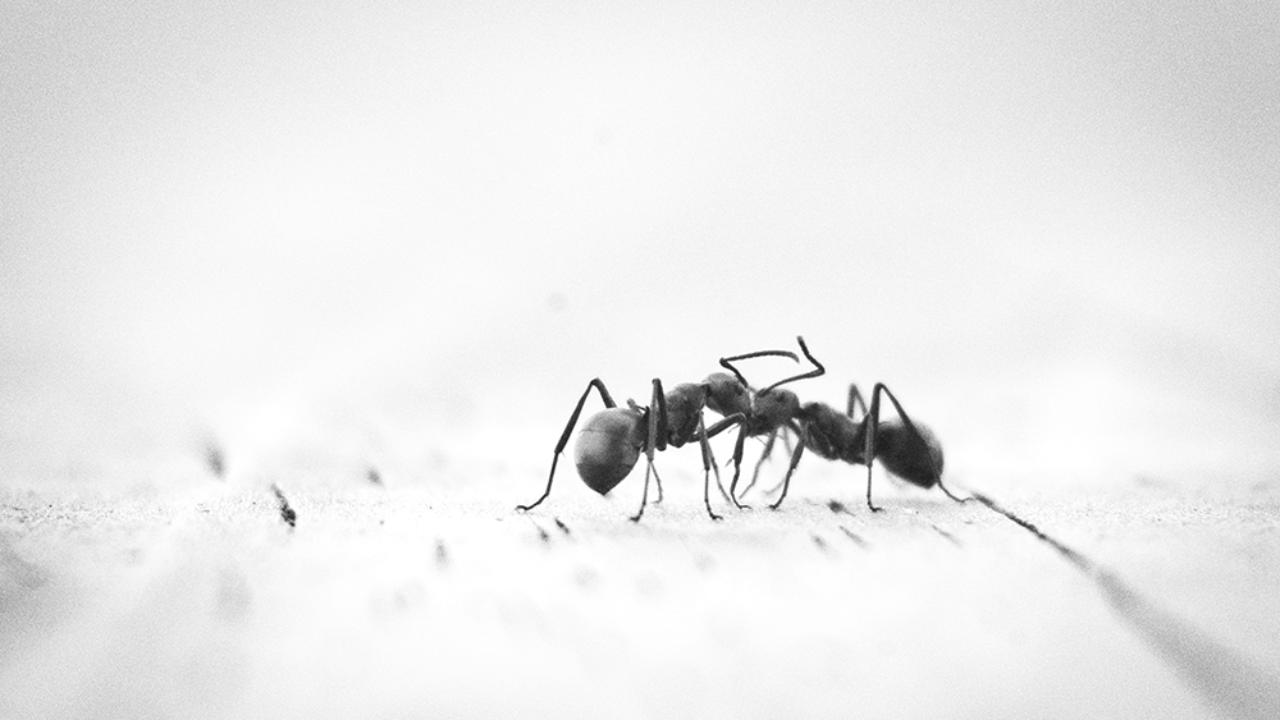 What Causes Ants In My House Bug House Pest Control