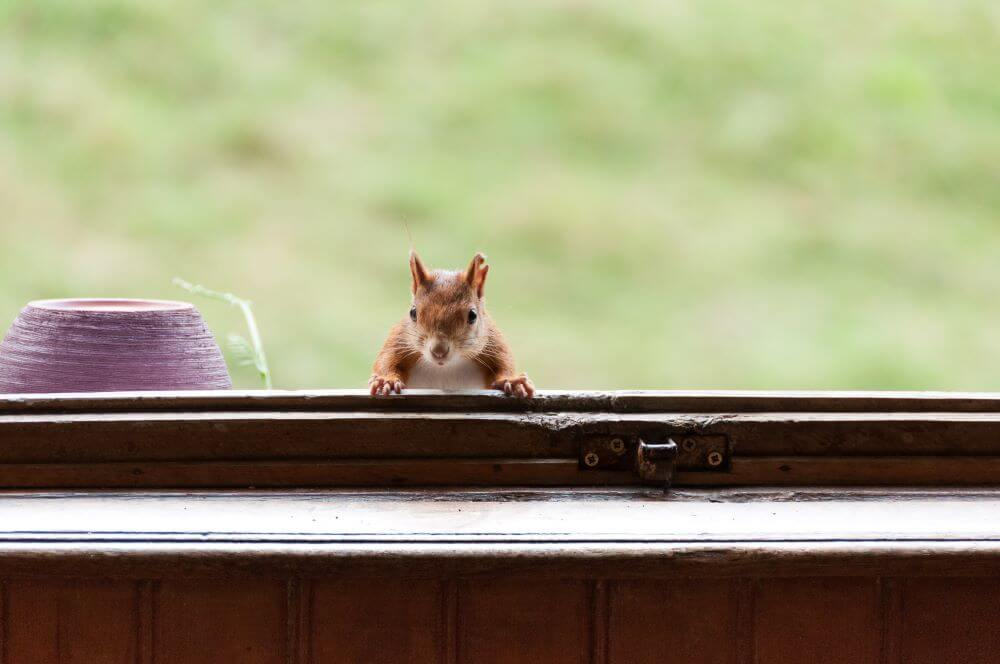 How to Get Rid of Squirrels Around Your Home