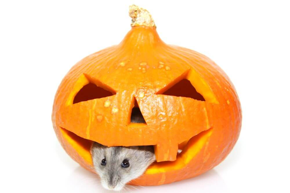 4 Tips for a Pest-Free Halloween