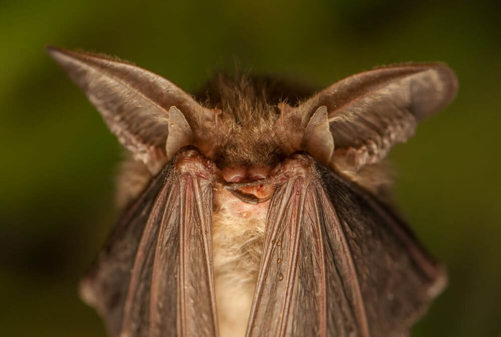 4 Places To Look For Bats in Your Home