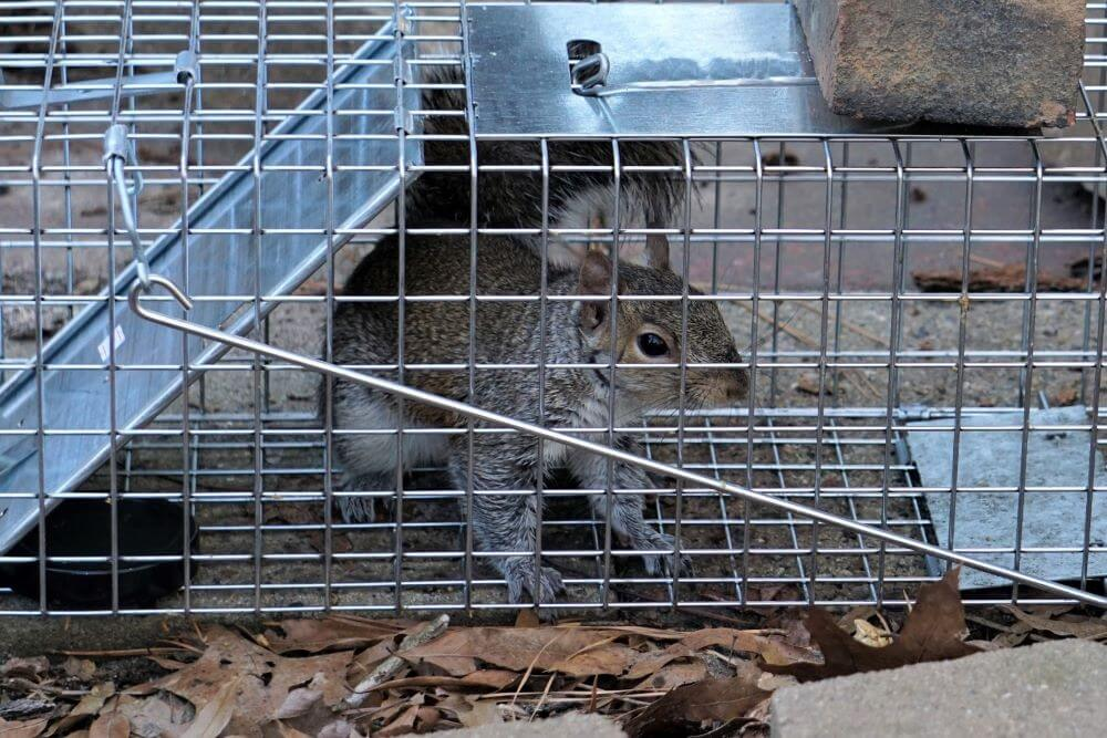 Simple Tips for Better Wildlife Control Around Your Home