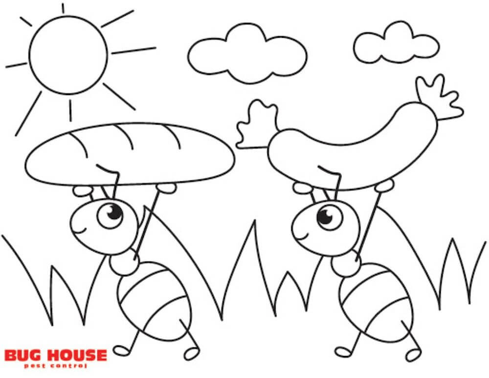 Bug House Activity Sheets