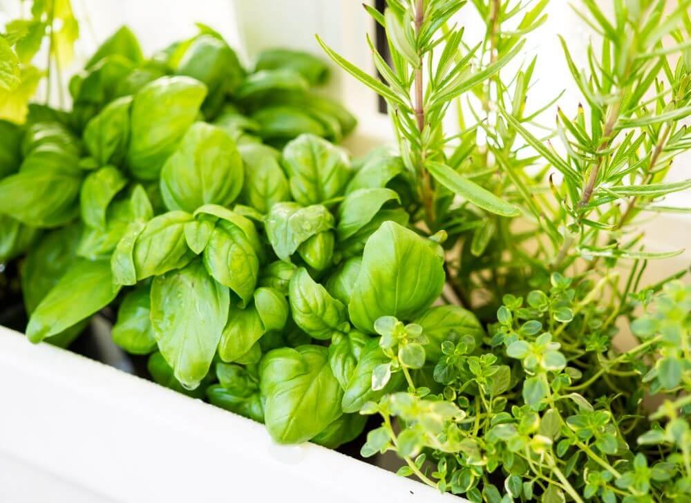 Homemade Garden Pesticides for Your New Quarantine Garden