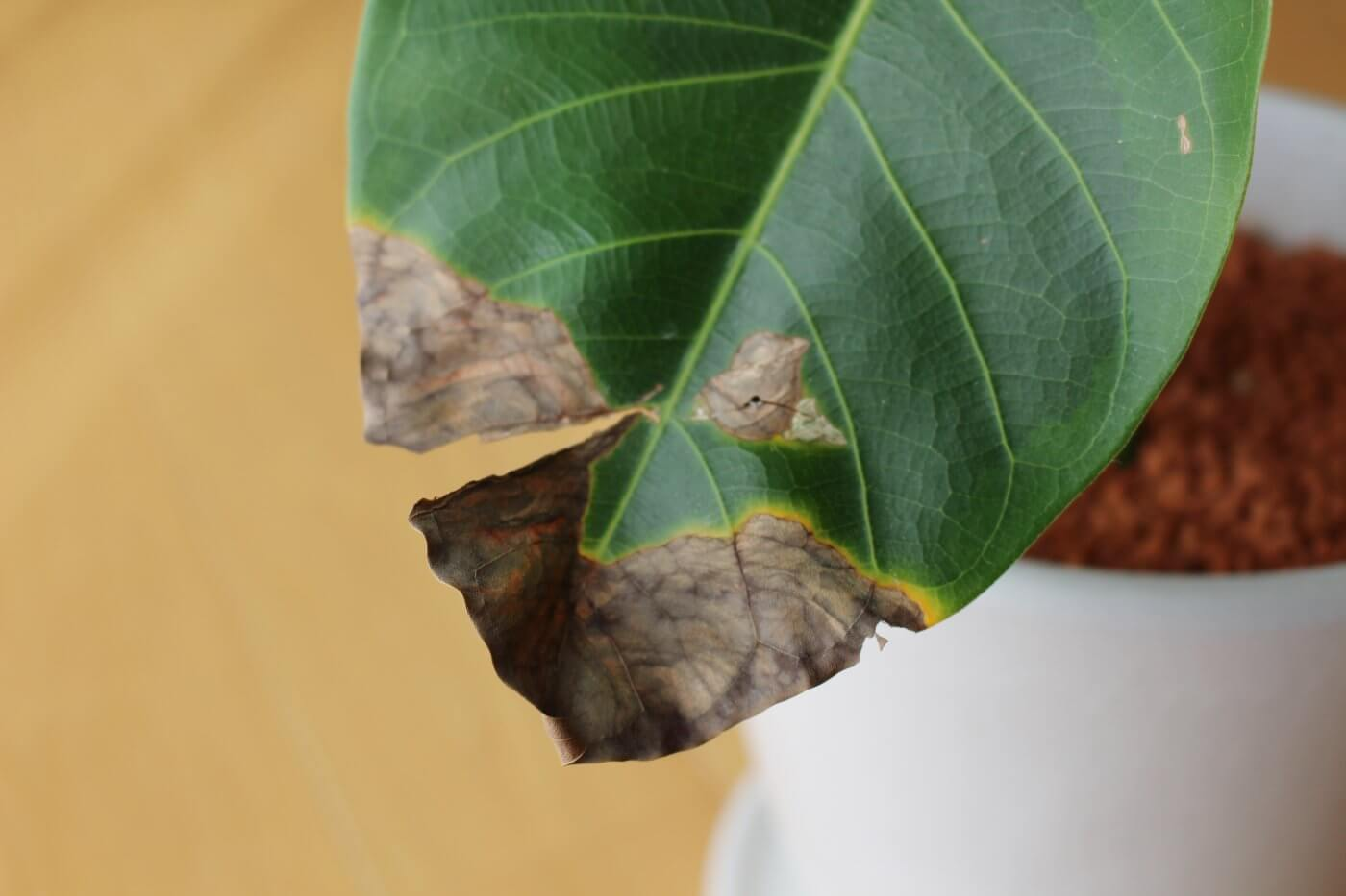 How to Remove Bugs on Houseplants