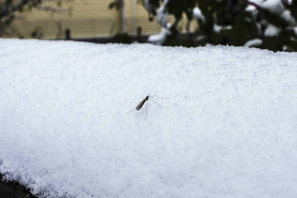 5 Fascinating Facts About Bugs in the Winter