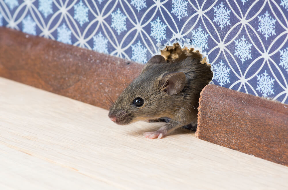 How to Get Rid of Entry Points for Mice