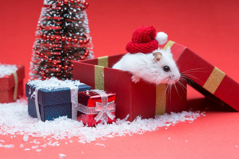 We Wish You a Pest-Free Christmas!