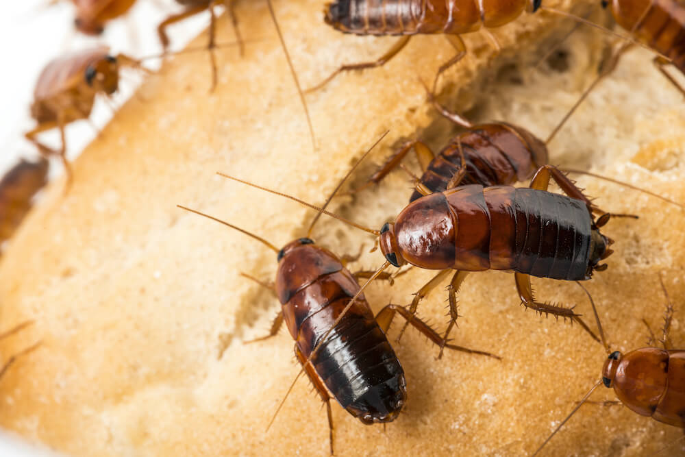3 Things You MUST Know About Roaches