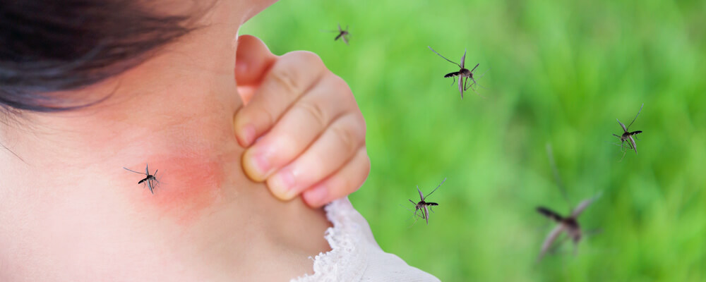 What to Expect With a Bug House Mosquito Treatment