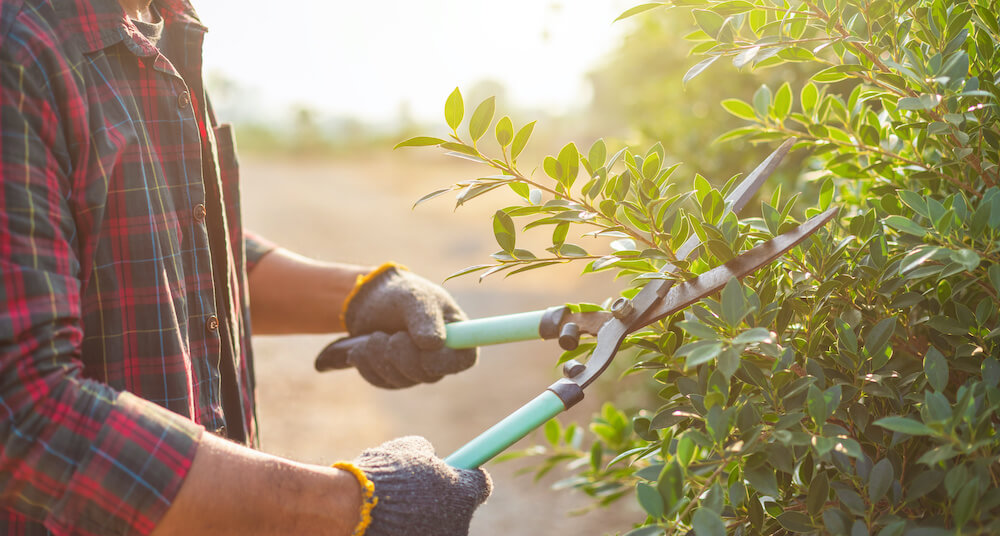 5 Tips to Take Care of Your Yard & Avoid Pests