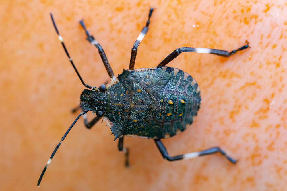 3 Signs of the Arrival of Fall: Fall Leaves, Pumpkins, and Stink Bugs